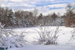 Winter Pond Royalty Free Stock Photos