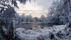 Winter at the pond royalty free stock image