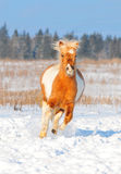 Winter pony free Stock Photos