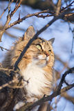 Winter portrait of a cat on a tree. Winter portrait of a beautiful red-haired cat on a tree against the sky stock photo
