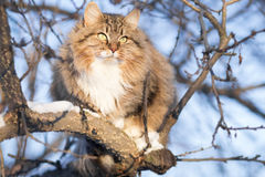 Winter portrait of a cat on a tree. Winter portrait of a beautiful red-haired cat on a tree against the sky royalty free stock photos