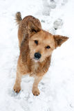 Winter portrait of a dog Royalty Free Stock Photography
