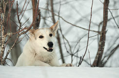 Winter portrait of a dog. Stock Images