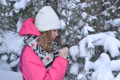 Winter portrait in fur-trees. Winter portrait in a skatesChristmas tree girl snow forest Royalty Free Stock Photography