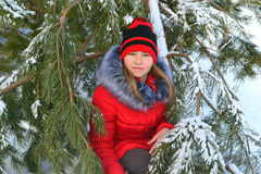 Winter portrait of a girl. In a pine forest Stock Images
