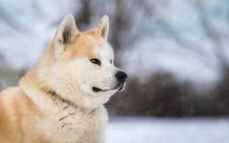 Winter portrait of Japanese Stock Photos
