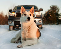 Winter Portrait Of A Dog. Royalty Free Stock Images