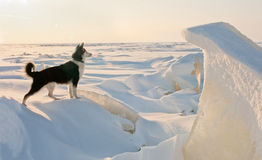 Winter Portrait Of A Dog. Stock Photo