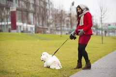 Winter portrait of pregnant woman walking dogs Stock Photos