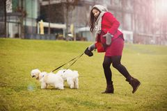 Winter portrait of pregnant woman walking dogs Stock Images
