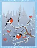 Winter postcard with bullfinches on a snow-covered rowan stock illustration