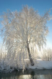 Winter postcard. Sunny tree. Winter postcard. Sunny tree with rime reflected in the river. Winter morning - snow, frost and sun shining royalty free stock photography