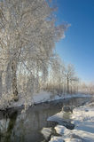 Winter postcard. Sunny tree reflected in river Stock Image
