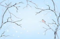 Winter postcard vector Royalty Free Stock Images