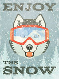 Winter Poster with Husky. Vector illustration, eps10. Royalty Free Stock Images