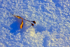 Winter present. Teil tree leaf on snow Royalty Free Stock Image