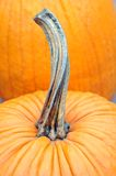 Winter pumpkin Stock Photos