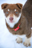 Winter puppy Stock Images