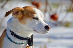 Winter puppy Stock Image