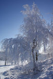 Winter Queen. Beautiful snowy tree in the winter landscape Stock Photos