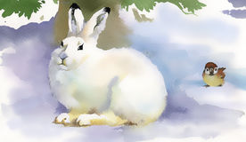 Winter rabbit stock photos