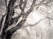 Winter rays Royalty Free Stock Photos