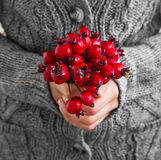 Winter Red Berries Bouquet Royalty Free Stock Image