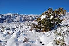 Red Rock Canyon After a Winter Storm. Red Rock Canyon National Conservation Area west of Las Vegas is made into a winter wonderland by a recent snowstorm Royalty Free Stock Images