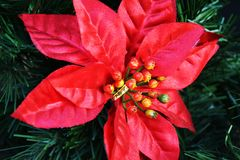 Winter red star and green pine, close up stock image