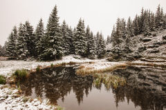 Winter reflection on the lake Royalty Free Stock Photo