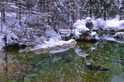 Winter reflections in a cold mountain stream, Slovenian Alps Royalty Free Stock Photos