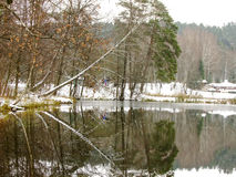 Winter Reflections. Reflection of Winter Forest in frozen Lake Stock Images