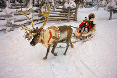 Winter Reindeer sledge racing in Ruka in Lapland in Finland. Winter Reindeer sledge racing in Ruka in Lapland, in Finland. Selective focus Royalty Free Stock Photography