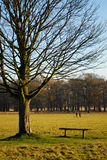 Winter in richmond park Stock Photography