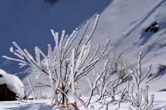 Winter rime. In new-fallen snow noon,in the beautiful blue sky the winter rime is very beautiful royalty free stock images