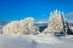 Winter rime and snow covered fir trees on mountainside Stock Photos