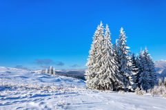 Winter rime and snow covered fir trees on mountainside Stock Image