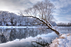 Winter river. With a tree standing alone Royalty Free Stock Photos