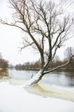 Winter river Royalty Free Stock Photography