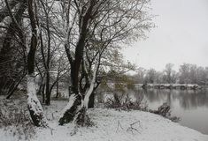 Winter river bank with trees and other plants covered with snow. Nature in winter - a river with trees and other plants covered with snow royalty free stock images