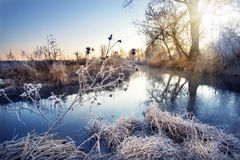 Winter river with branches in the frost Royalty Free Stock Photos