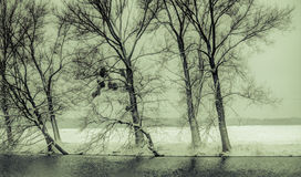 Winter. On the river in eastern Croatia Royalty Free Stock Photography