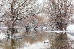 Winter river landscape Royalty Free Stock Image