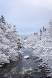 Winter river. Snow covered trees line a river bank Royalty Free Stock Image