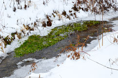 Winter river with snow and ice. Winter river with snow, ice and some plants Stock Photos