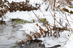 Winter river with snow and ice. Winter river with snow, ice and some plants Royalty Free Stock Image