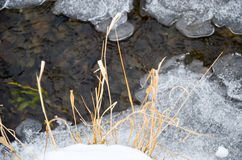 Winter river with snow and ice. Winter river with snow, ice and some plants Royalty Free Stock Images