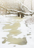 Winter river and trees Royalty Free Stock Image