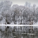 Winter river and trees in winter season Royalty Free Stock Photo