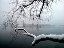Winter river view. Trees branches branch bw black and white snow sky first snow Royalty Free Stock Photography